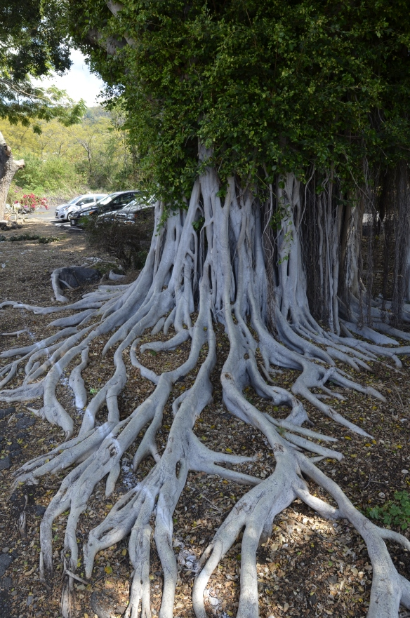 Is this not an amazing tree?