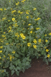 Wildflowers on the path to Maka Horse.