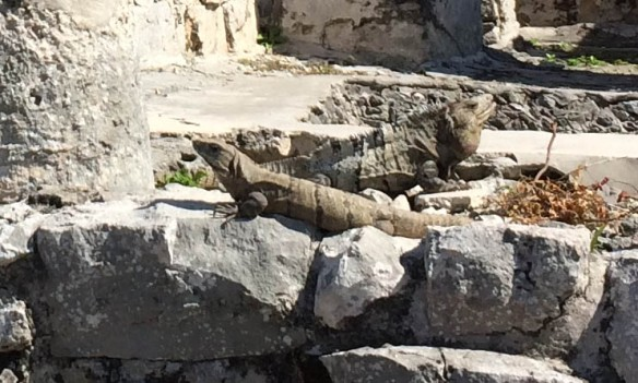 Mr. and Mrs. Iguana